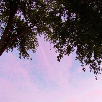 Happy Weekend 💜 Tree Sky Low Angle View Beauty In Nature Tranquility Pink Color Cloud - Sky Silhouette Idyllic Tranquil Scene Nature