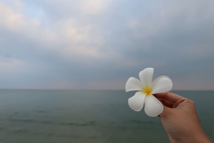 Close-up of hand holding white flower against sea