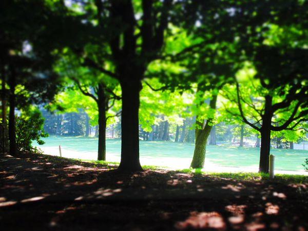 Good Morning! . Tranquility Nature Sunshine EyeEm Best Shots - Sunsets + Sunrise Trees Landscape