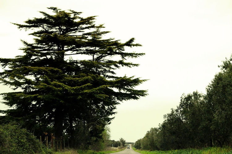 Beauty In Nature Big Tree Clear Sky Countryside Green Nature No People Non-urban Scene Single Car Street Tranquility Tree