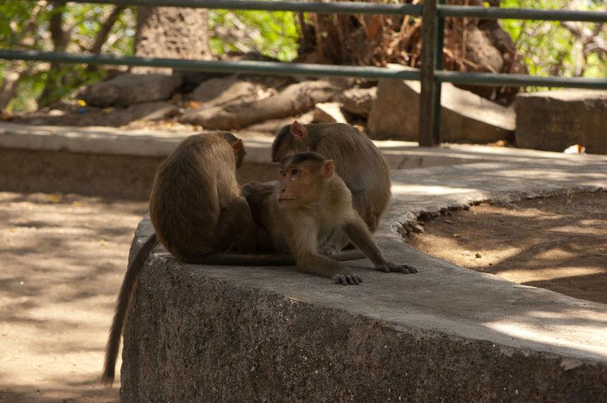 Animal Animal Themes Focus On Foreground Mammal Monkey Job Monkies In Action Monochrome Mumbai Outdoors Wildlife