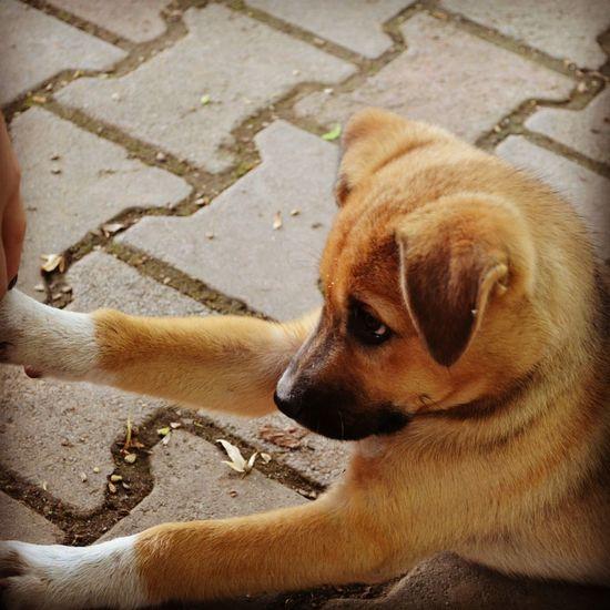 Huzur Mahsun Mahçup Dog