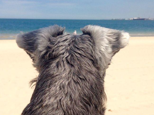Sirius dog woman's best friend