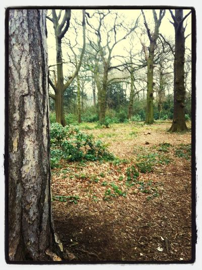 If you go down to the woods today...