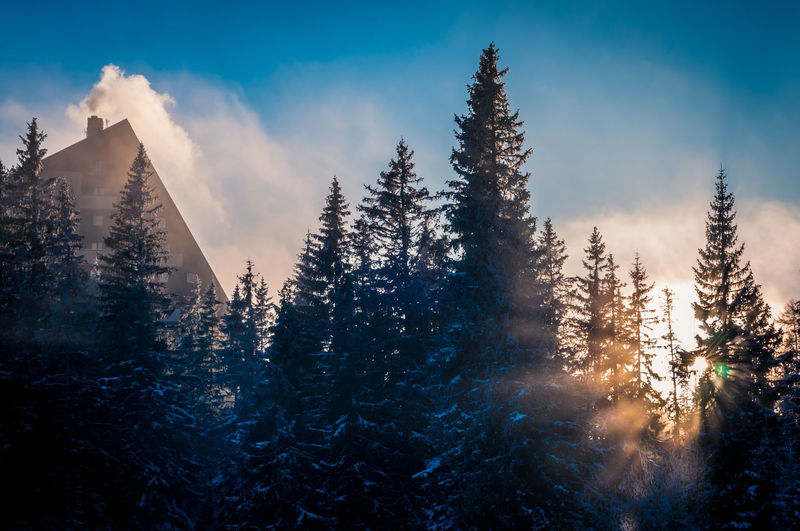 Beauty In Nature Blue Cabin In The Woods Cold Temperature Forest Freezing Hotel Landscape Mountain Natural Parkland Nature No People Outdoors Pinaceae Pine Woodland Silhouette Snow Tree EyeEmNewHere EyeEm Best Shots