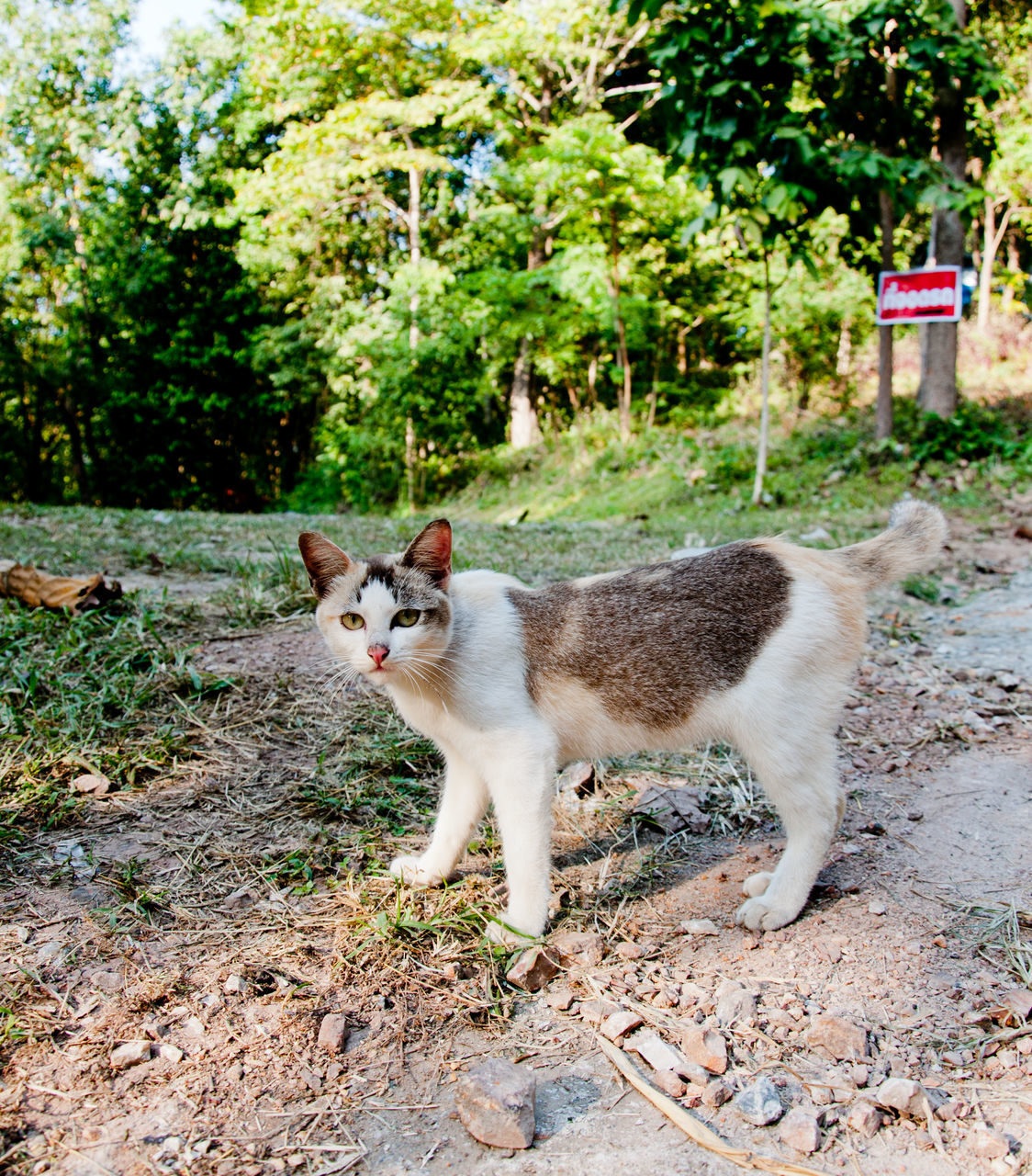 one animal, animal themes, domestic cat, mammal, domestic animals, feline, day, outdoors, pets, no people, portrait, looking at camera, plant, sitting, full length, nature