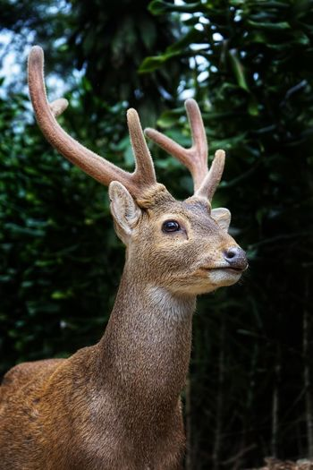 Close-up of stag standing in forest