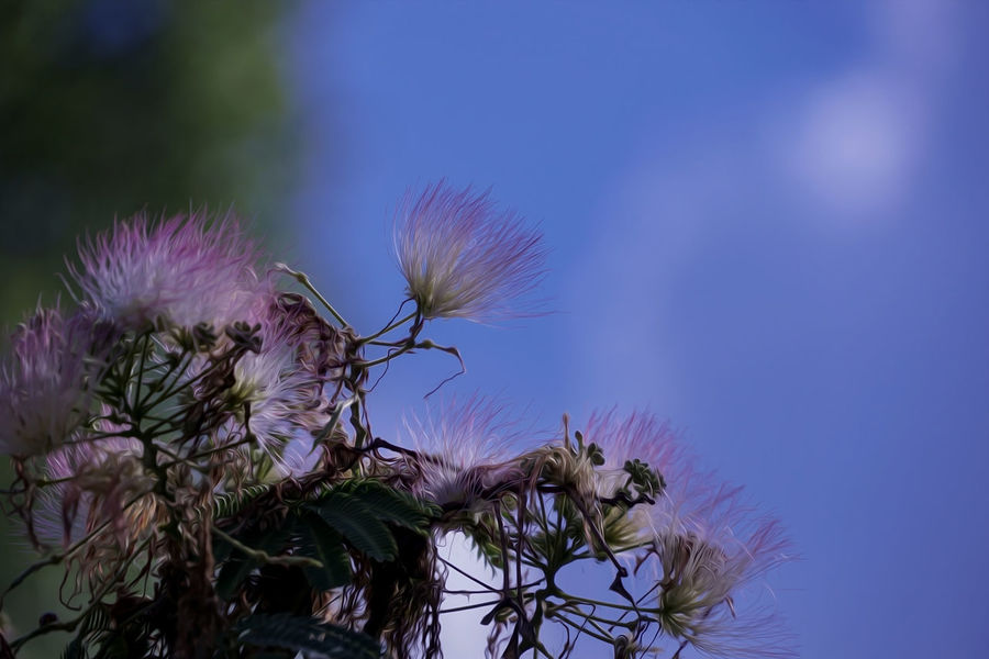 Beauty In Nature Blue Close-up Flower Flower Head Flowering Plant Fragility Freshness Growth Inflorescence Low Angle View Nature No People Outdoors Petal Pink Color Plant Purple Sepal Sky Tranquility Vulnerability