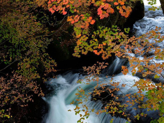 Scenic view of stream flowing through rocks during autumn