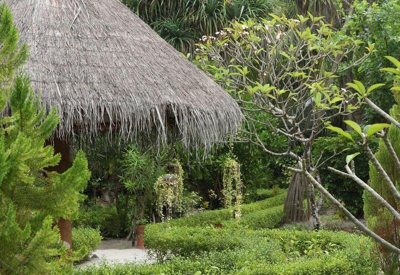 Maldives Garden Trees Green Roof