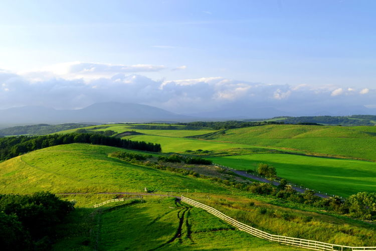 Rolling Landscape Patchwork Landscape Oilseed Rape Mustard Plant Crop  Poppy Farm Single Tree Topography Valley Combine Harvester Cultivated Land Farmland Ear Of Wheat Terraced Field Barley Rice Paddy Agricultural Field Cereal Plant