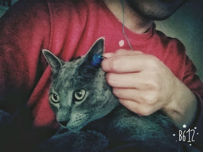 Sharing music with my cat♡ For The Love Of Music Listening To Music Cat Lovers Eyem Animal Lovers Eyemphotography Smartphonephotography From My Point Of View Having Friends Friend Forever My Precious