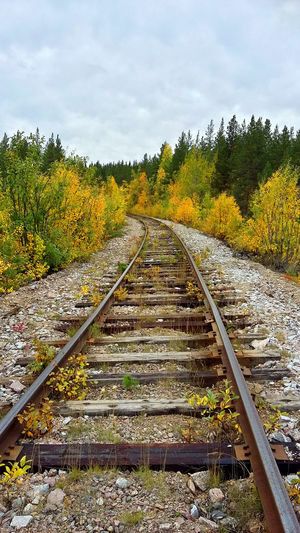 Autumn Autumn Colors Autumn Leaves Beauty In Nature Bridge Bridgeporn Bridges Day Forrest Nature Nature_collection Naturelovers Rail Railroad Railway Railway Track Railwaystation River Stream Tranquil Scene Tranquility Traveling Trees Waterfall Yellow
