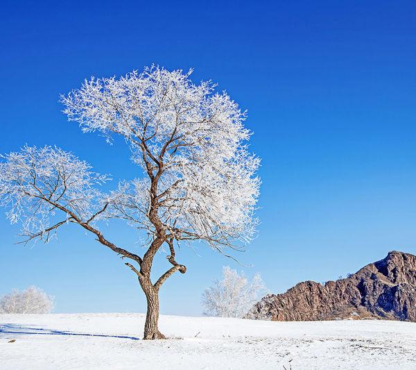 EyeEm Selects Blue Tree Snow ❄