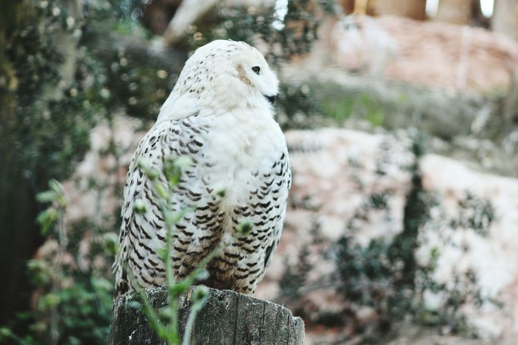 Zoo Animals Nature Volatile Photo Taking Photos Photography