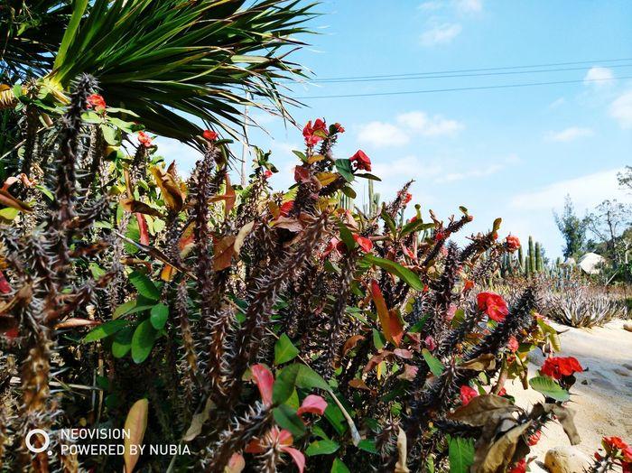 Mobile Photography 厦门中国 The Botanical Garden