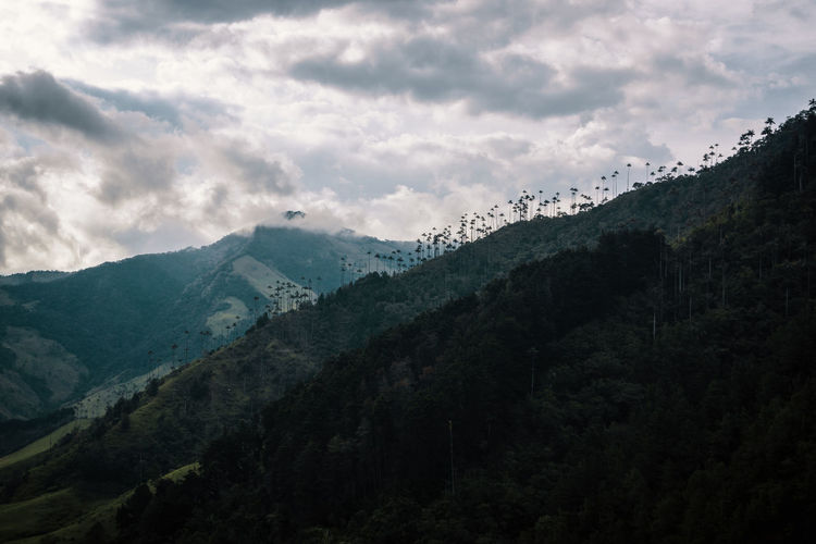 Low angle view of trees growing on mountains against cloudy sky