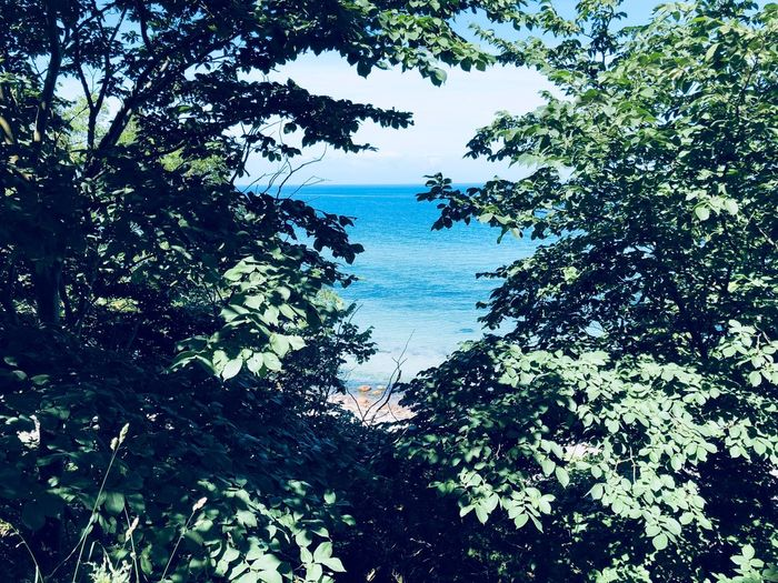 Warm Nature Photography Nature_collection Meer Ostsee Sunshine Tree Plant Growth Beauty In Nature Tranquility Nature No People Tree Plant Beauty In Nature Nature Land Scenics - Nature Outdoors Water Day Sky Branch Green Color