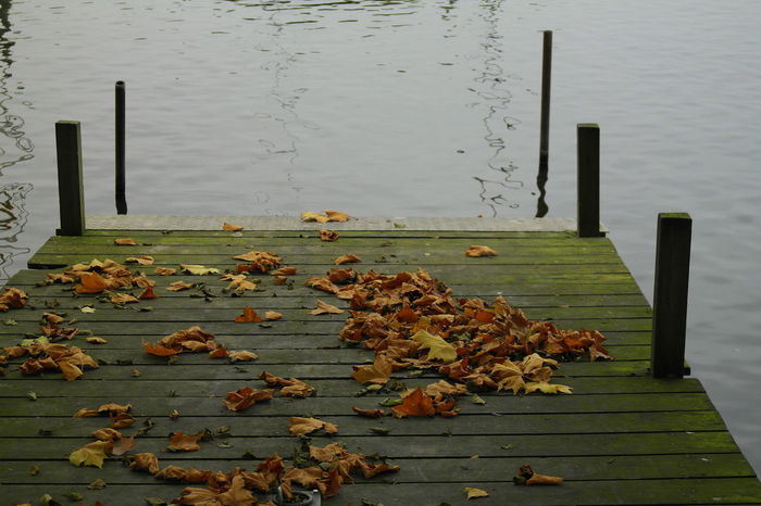 Hamburg Alstertour Alster Autumn Colors