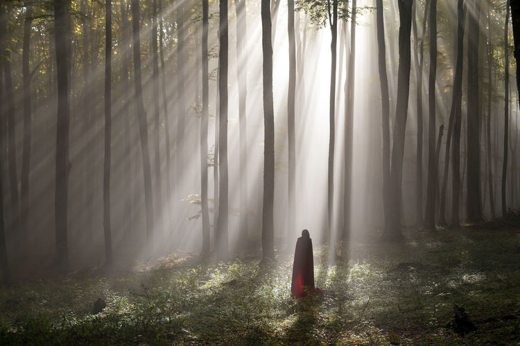 Red Riding Hood portrait in the autumn foggy forest Autumn Colors Fairytale  Trees Woman Beautiful Woman Fall Fog Foggy Forest Light And Shadow Mist Portrait Red Riding Hood Scene