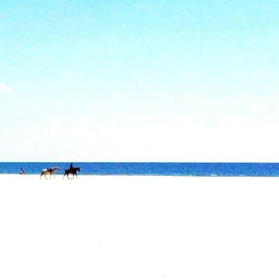 Beach Sea Sand Outdoors Vacations Horses
