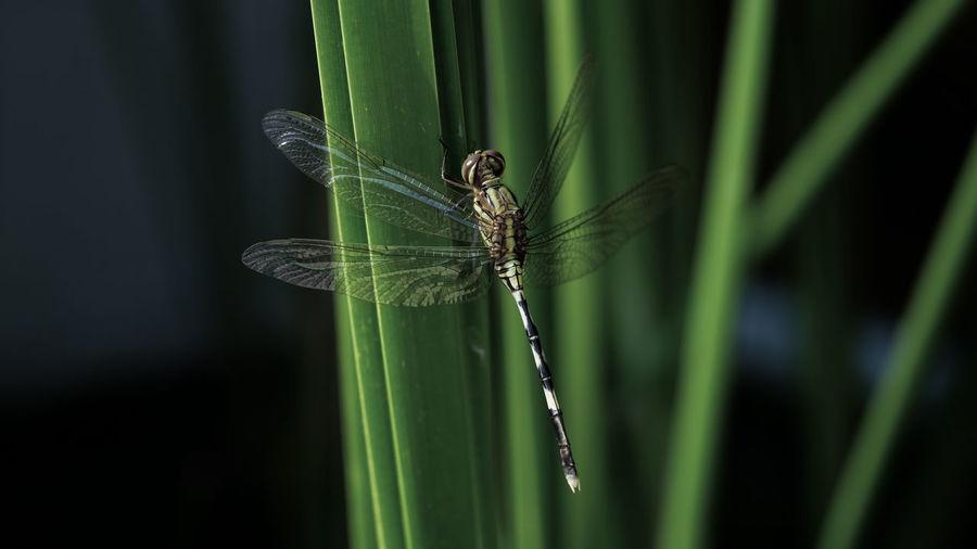 Close-up of damselfly on grass