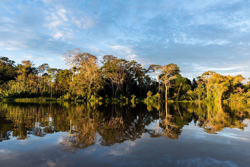 The amazon rainforest of Parcaya Samiria deep inside of the Selva in Peru! Reflection Water Tree Lake Sky Tranquility Plant Cloud - Sky Nature Scenics - Nature Tranquil Scene Beauty In Nature No People Waterfront Day Symmetry Growth Outdoors Standing Water Reflection Lake Tree Amazon Rainforest