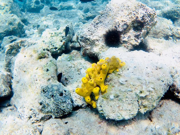 Sealife Fishes Beauty In Nature No People Nature Yellow Day High Angle View Sea