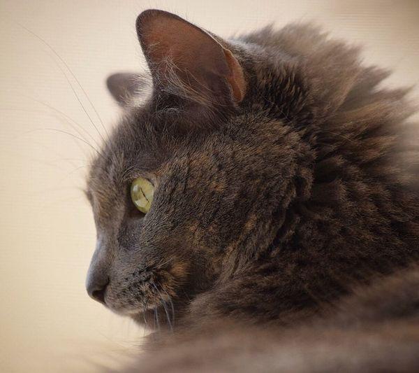 Calm cat Animal Themes One Animal Animal Mammal Feline Cat Domestic Cat Pets Domestic Animals Close-up