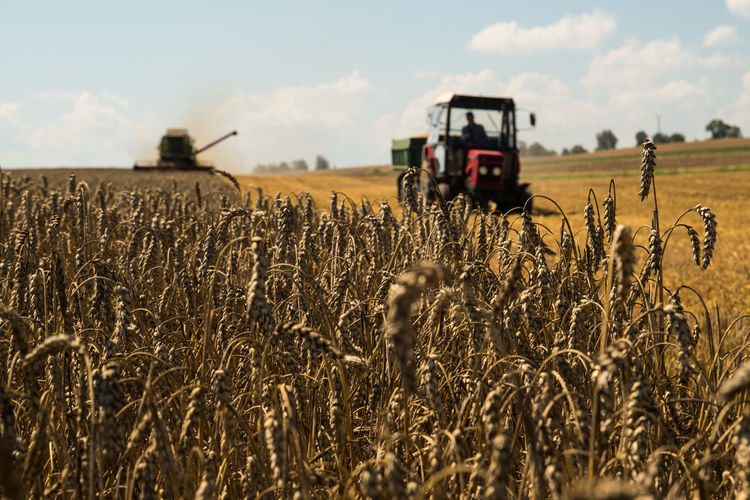 EyeEm Best Shots EyeEm Gallery Poland Poland Is Beautiful Wheat Agricultural Machinery Agriculture Farm Farmer Field Harvesting Sky Tractor