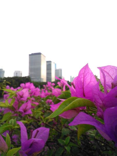 City Landscape City View  City Spot Beatiful Day! Landscape_captures Landscape_photography Flower And The City City Garden