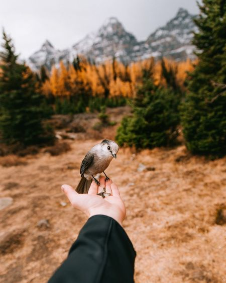 Perfect moments. Lost In The Landscape Human Hand Human Body Part Real People One Person Personal Perspective Human Finger Animal Themes Focus On Foreground Holding One Animal Day Animals In The Wild Outdoors Lifestyles Nature Bird Animal Wildlife Close-up Perching Connected By Travel The Week On EyeEm Editor's Picks Fresh On Market 2017 10