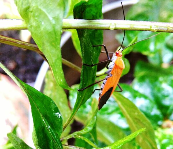 Hiiiii ✌ Hello World Check This Out Taking Photos Relaxing Nice Sunny Day BestEyeemShots Gogreen Insect Photography Insect_perfection Insect Macro  Colorfulinsect Color Of Nature