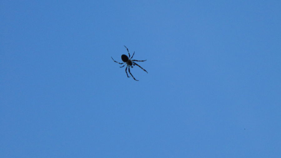 Low angle view of spider against blue sky