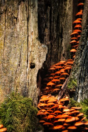 Close-up of wood against tree trunk