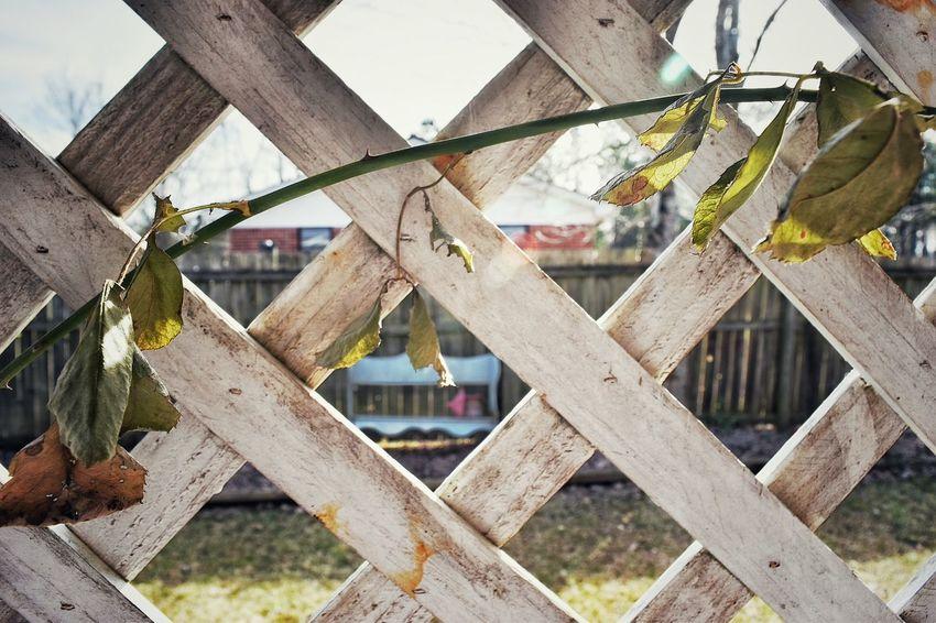 Bench Criss Cross Lattice Leaves Outdoors Rose Vine Vine Wood Pattern Pieces