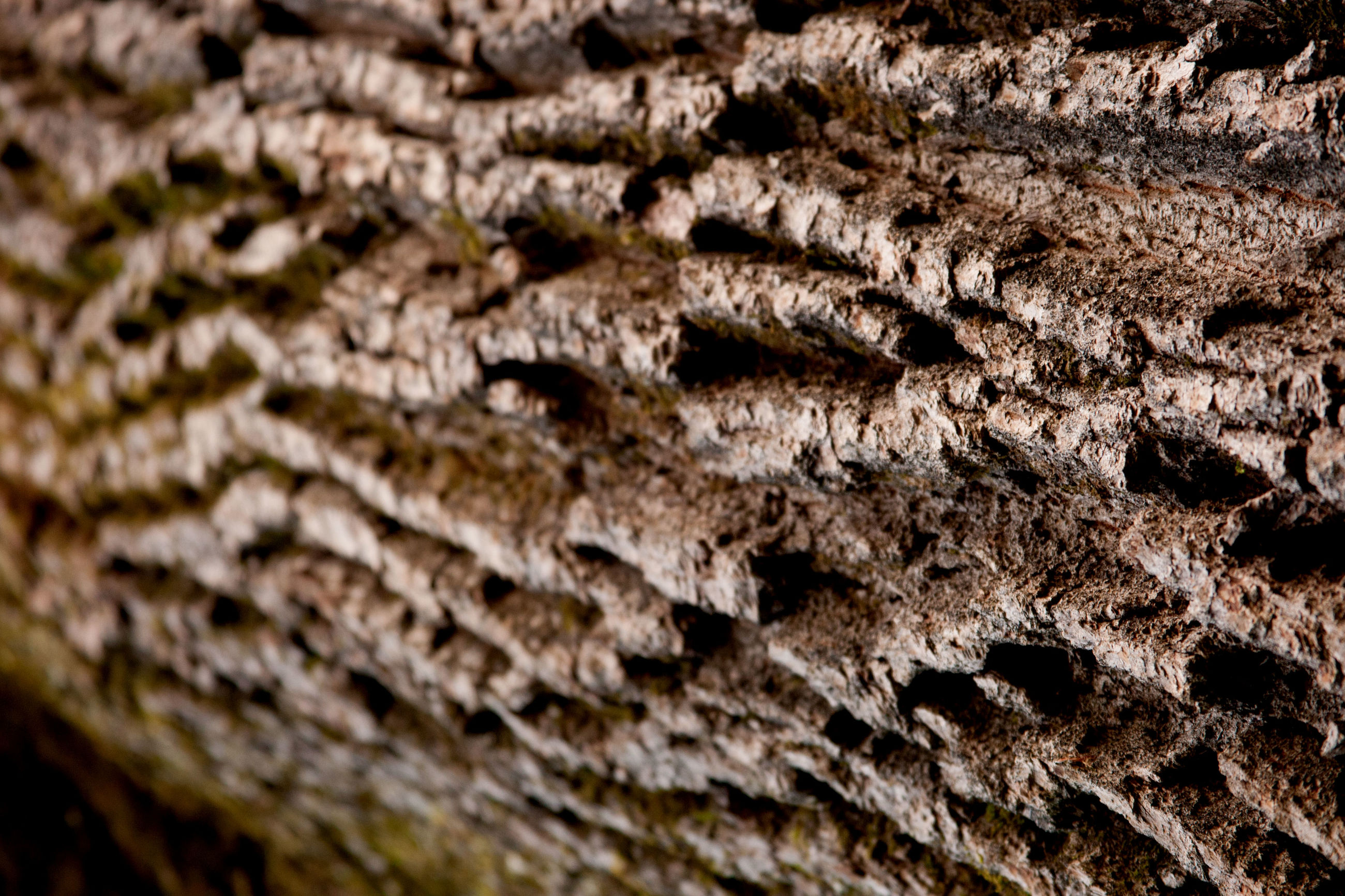 close-up, textured, backgrounds, full frame, pattern, no people, indoors, day, nature