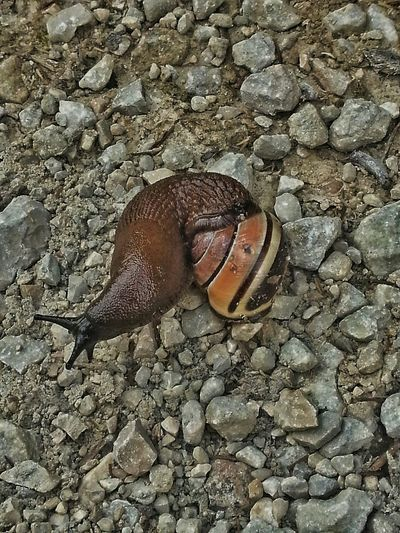 Jelous? Taking Photos Animal Photography Animallovers EyeEm Animal Lover Snail Collection Snailhouse EyeEm Nature Lover