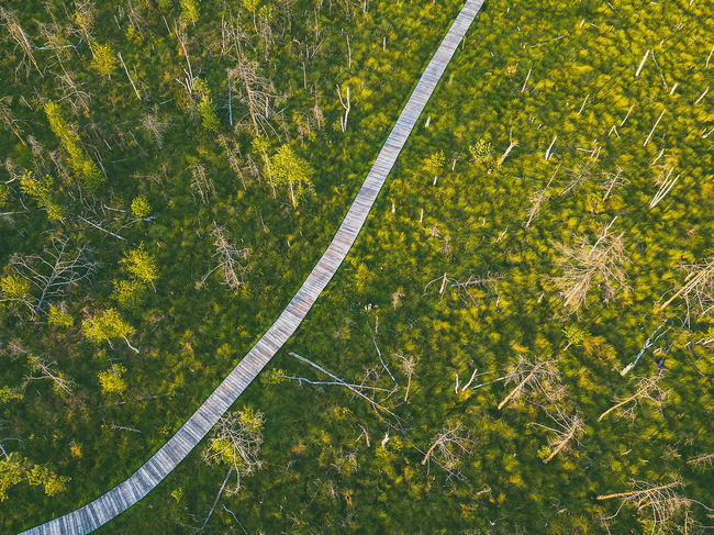 Swamp walkpath Aerial Shot DJI Mavic Pro DJI X Eyeem Drone  Kaunas County Lithuania Lithuania Nature Aerial Aerial View Beauty In Nature Day Dubrava Environment Field Full Frame Grass Green Color Growth High Angle View Land Landscape Mavic Mavic Pro Nature No People Non-urban Scene Outdoors Plant Scenics - Nature Tranquility Tree Walkpath