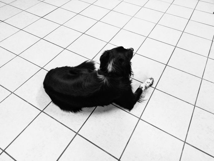 Relax Cane Dogs Of EyeEm Floor White Background Good Morning World! Geometric Blackwhite Black&white Black & White Black And White Blancoynegro Blackandwhite Monochrome Pet Photography  EyeEm Animal Lover Dog Animal Themes Eye For Photography Eye4photography  Minimalism