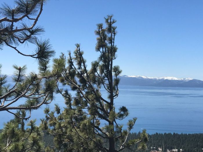 Tahoe unfiltered..... Plant Sky Tree Tranquility Growth Beauty In Nature Nature Clear Sky No People Tranquil Scene Scenics - Nature Day Water Blue Outdoors Low Angle View Land Coniferous Tree Branch Idyllic