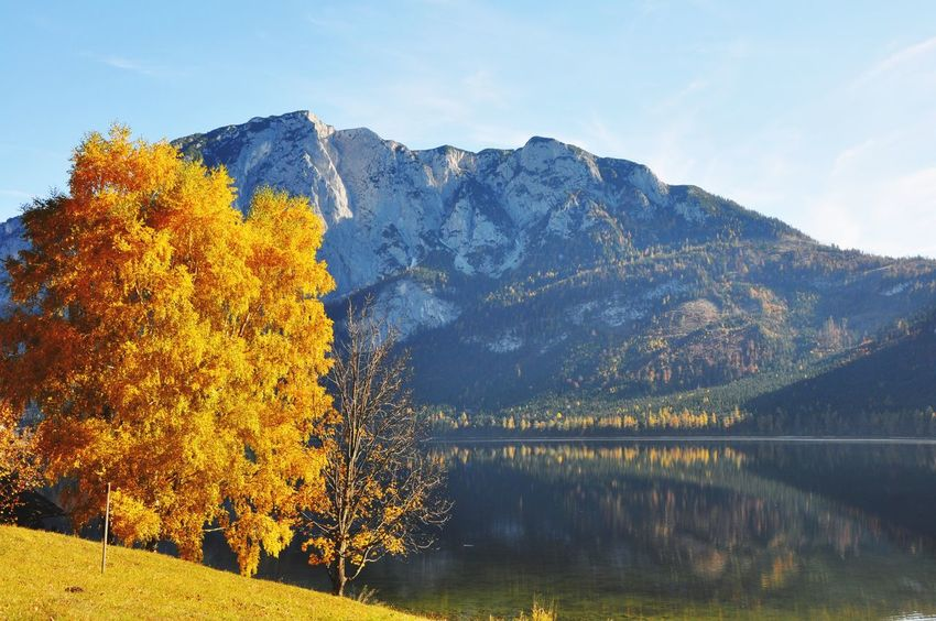 Larches Altaussee Austria Autumn Beauty In Nature Nature Tree Scenics Tranquil Scene Mountain Tranquility Change Water Lake Idyllic Outdoors Sky No People Day Mountain Range Leaf