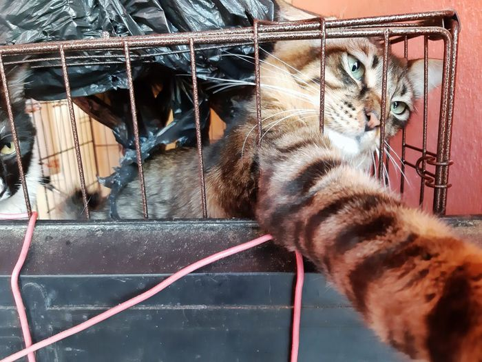 Cats Feline