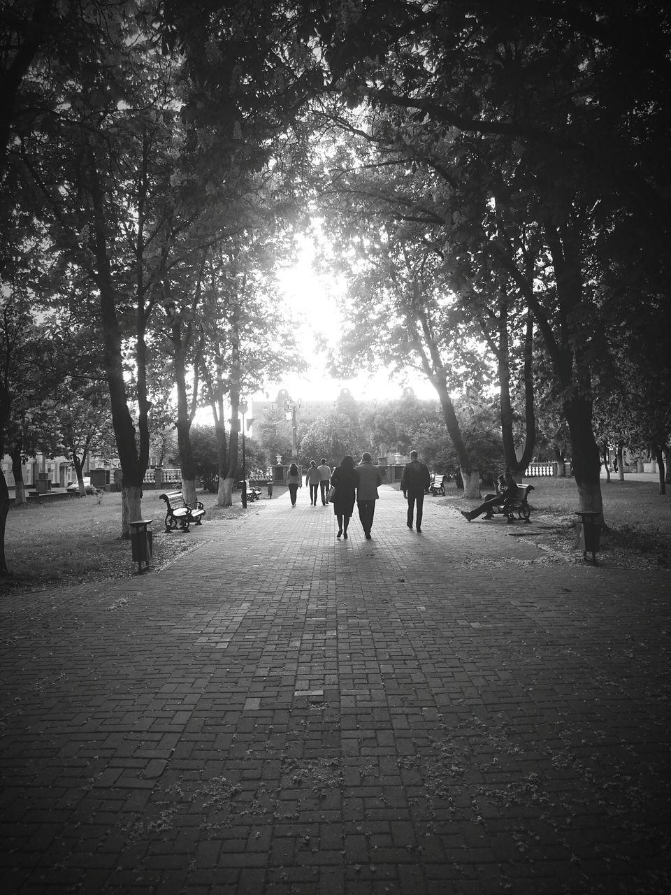 People Amidst Trees Against Sky