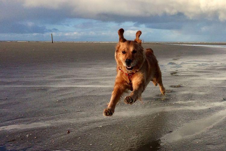 Greta @Beach