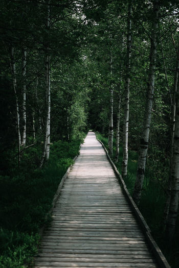 Empty boardwalk in forest