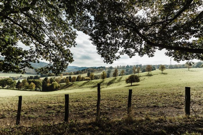 Fall Beauty Landscape Brown Canon Agriculture Green Betterlandscapes Tree Rural Scene Field Tranquility Nature No People Grass Tranquil Scene Outdoors Beauty In Nature Scenics