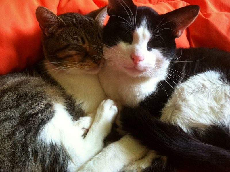 Cat Cat Lovers Domestic Cat Animal Photography Purr-sonality Relaxing Sleeping Cat Antique Cameras Brother❤ Cold Days Purrfectmorning