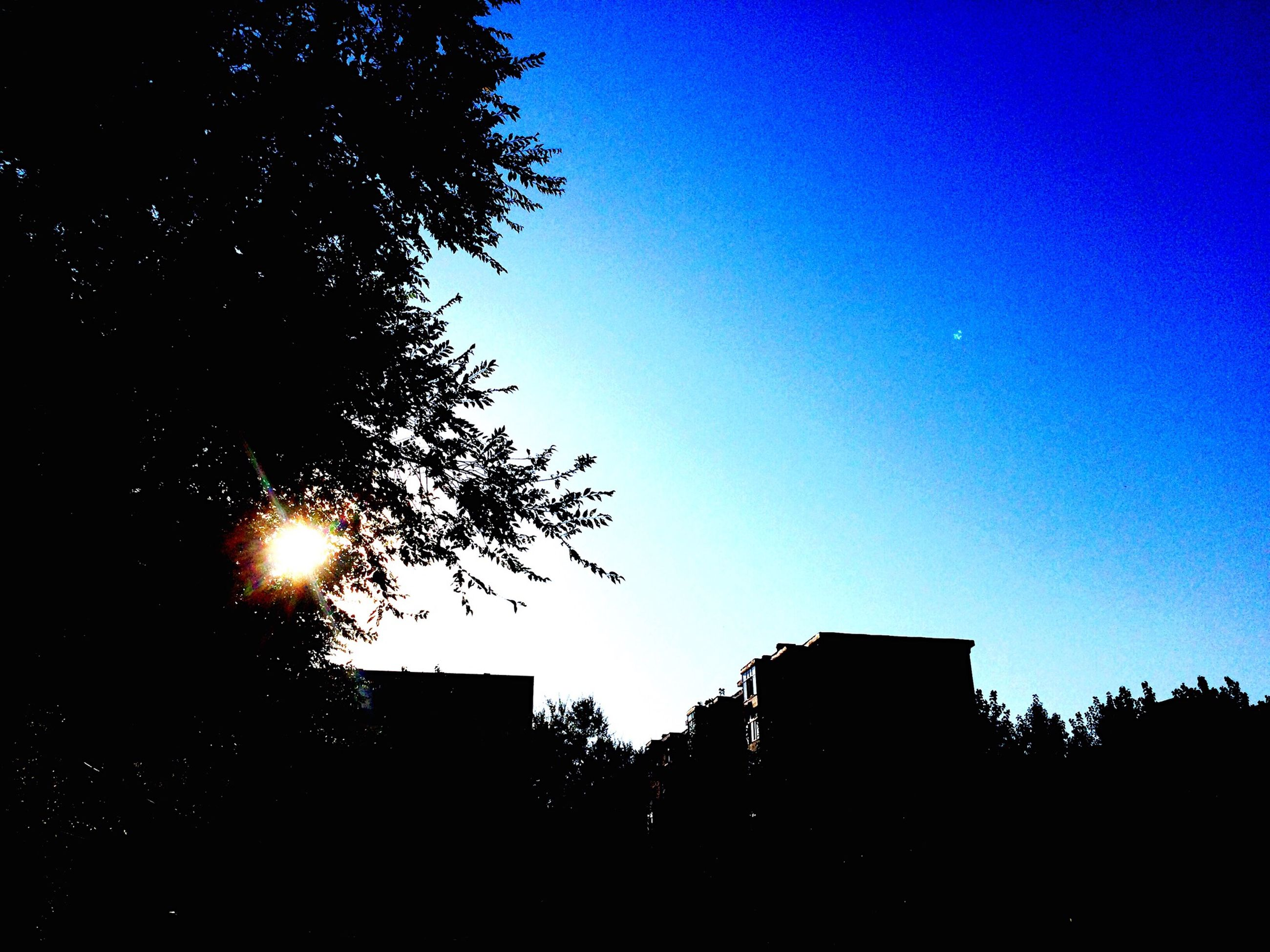 building exterior, built structure, silhouette, architecture, clear sky, low angle view, tree, sun, blue, sunset, sunlight, copy space, house, sky, branch, bare tree, outdoors, residential structure, no people, nature