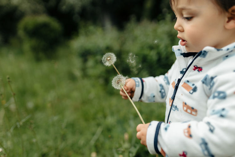 Girl holding dandelion on field